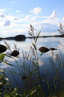 Lehtosenjärvi.