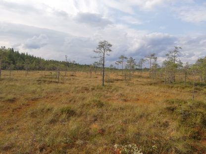 Iso-Valkiainen view.