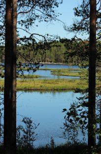 Jatkonjärvi scenery.